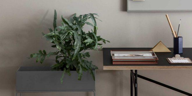 Pflanzen deko mit anspruch raum blick magazin for Raum pflanzen
